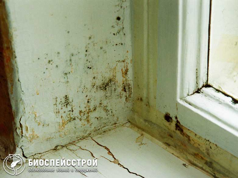 Плесень в квартире - что делать, как удалить