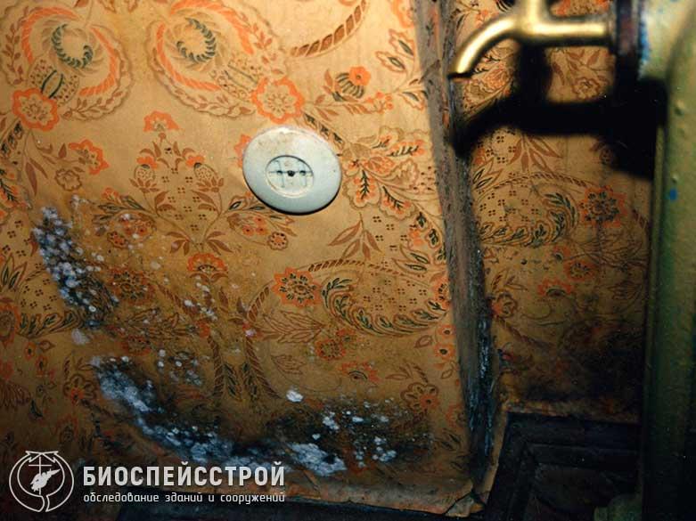 Виды плесени (плесневого грибка) в наших квартирах