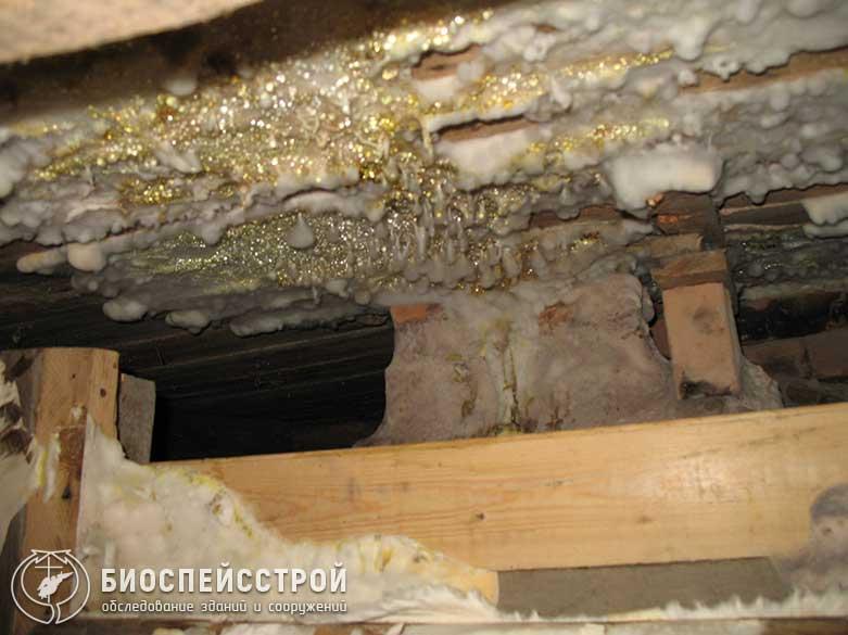 Как предотвратить появление грибка на стадии строительства и эксплуатации в душевых и бани