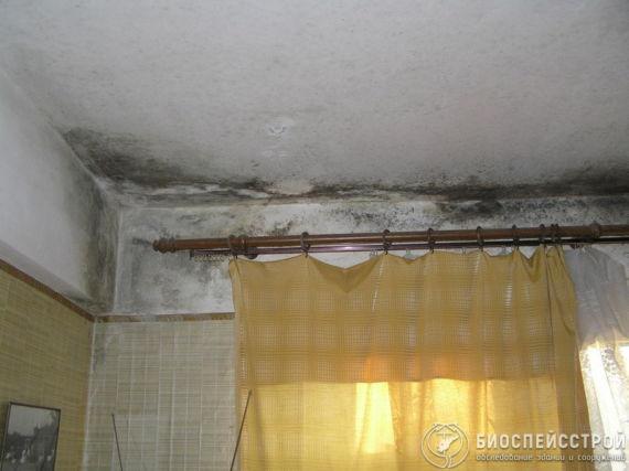 Плесень в жилой комнате